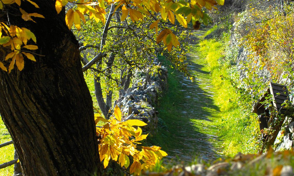Hiking holiday in the autumn: Dive into a sea of colours