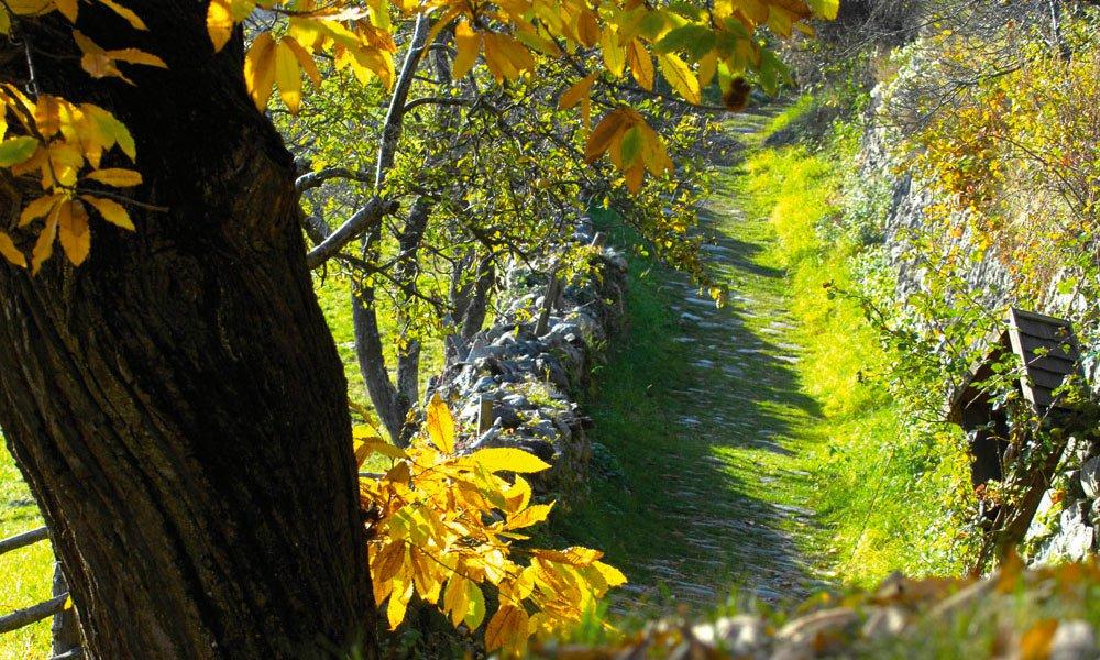 Wanderurlaub im Herbst: Tauchen Sie in ein Meer von Farben