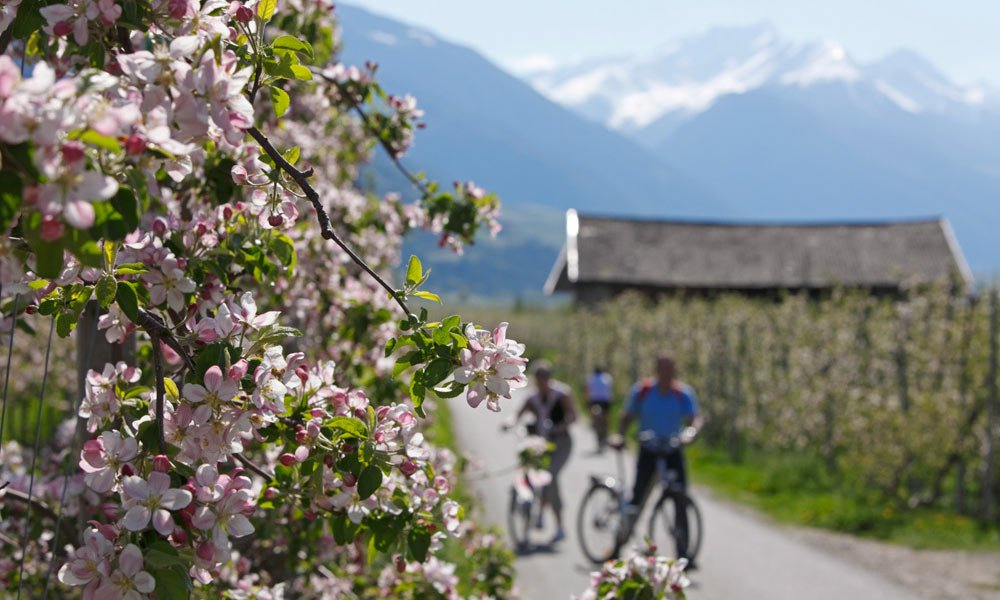 Bike holiday in South Tyrol: Bicycle dreams between Brennero and Lienz
